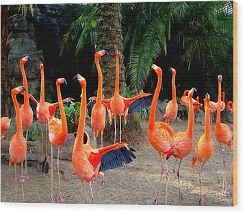 Dance Of The Flamingos Wood Print by Phyllis Beiser