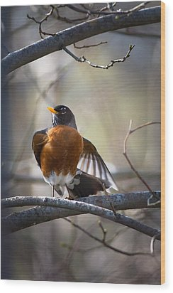 Dance Of The Robin Wood Print by Annette Hugen