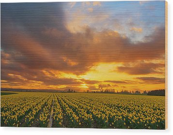 Dances With The Daffodils Wood Print by Ryan Manuel