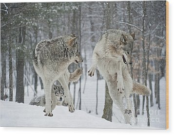 Wood Print featuring the photograph Dances With Wolves by Wolves Only