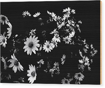 'dancing Daisies' Wood Print