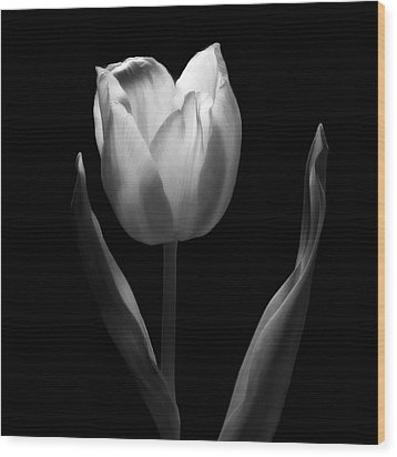 Abstract Black And White Tulips Flowers Art Work Photography Wood Print
