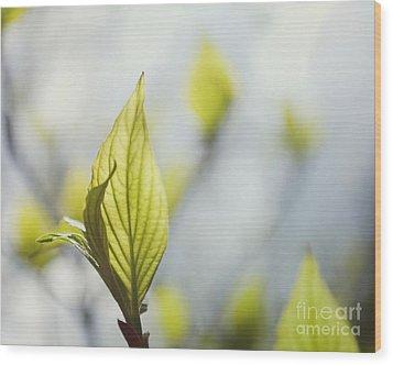 Dancing Leaves Wood Print