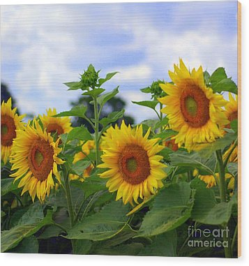 Dancing Sunflowers Wood Print by Kathleen Struckle