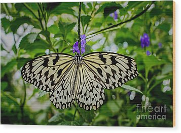 Dancing With Butterflies Wood Print by Jon Burch Photography