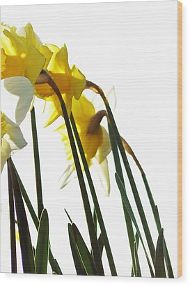 Dancing With The Daffodils Wood Print by Pamela Patch
