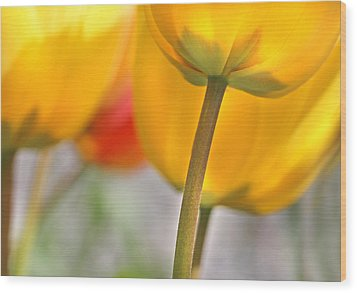 Dancing Yellow Tulip Flowers Wood Print by Jennie Marie Schell