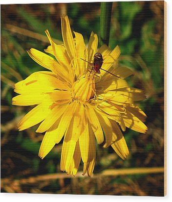 Wood Print featuring the photograph Dandelion And Bug by Pete Trenholm