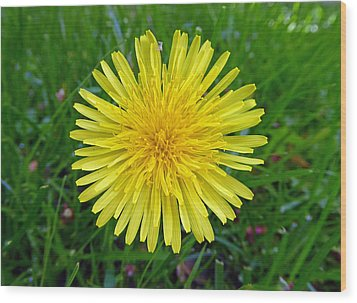 Wood Print featuring the photograph Dandelion And Spider by Laurie Tsemak