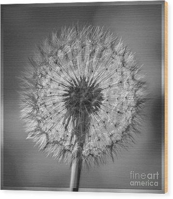 Dandelion Wood Print by Bryan Freeman