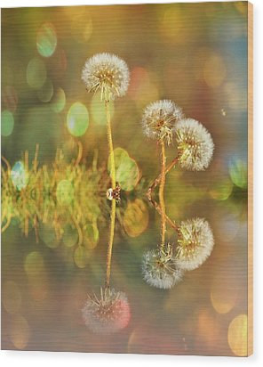 Dandelion Delight Wood Print
