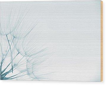 Dandelion Detail Against White Background Wood Print by Vlad Baciu