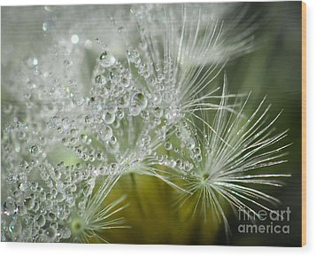 Dandelion Dew Wood Print by Amy Porter