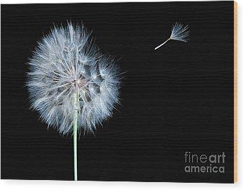 Dandelion Dreams Wood Print by Cindy Singleton