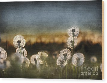 Dandelion Dusk Wood Print by Cindy Singleton