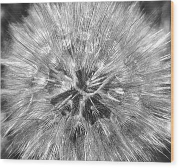 Dandelion Fireworks In Black And White Wood Print by Rona Black