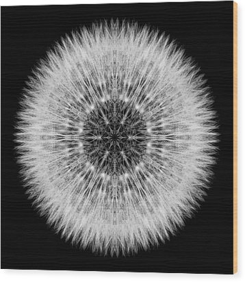 Dandelion Head Flower Mandala Wood Print
