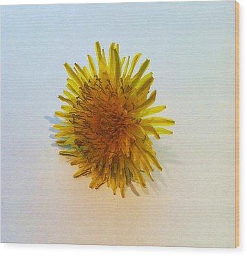 Dandelion II Wood Print by Anna Villarreal Garbis