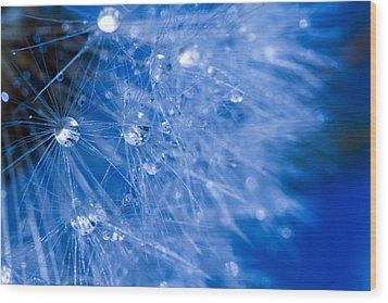 Dandelion Lights Wood Print by Rebecca Cozart