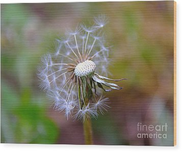 Wood Print featuring the photograph Dandelion by Lisa L Silva