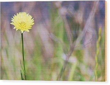 Dandelion Wood Print by Lorri Crossno