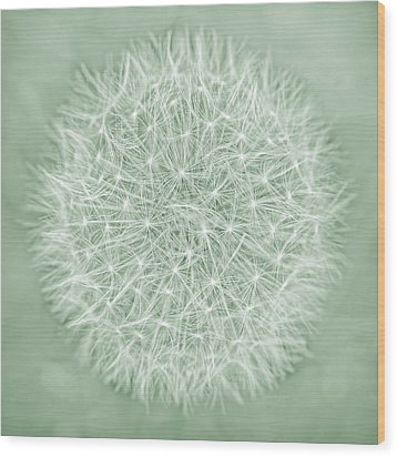 Dandelion Macro Abstract Soft Green Wood Print by Jennie Marie Schell