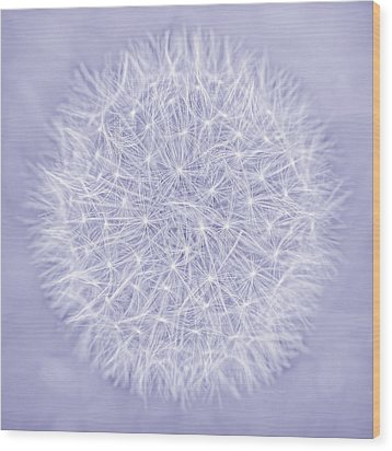 Dandelion Marco Abstract Lavender Wood Print by Jennie Marie Schell