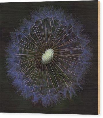 Dandelion Nebula Wood Print by Kathy Clark