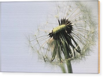 Dandelion Puff Wood Print