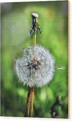 Dandelion Released Wood Print