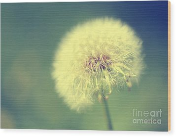 Dandelion Seed Head Wood Print by Karen Slagle