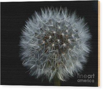 Dandelion Seed Head On Black Wood Print by Sharon Talson