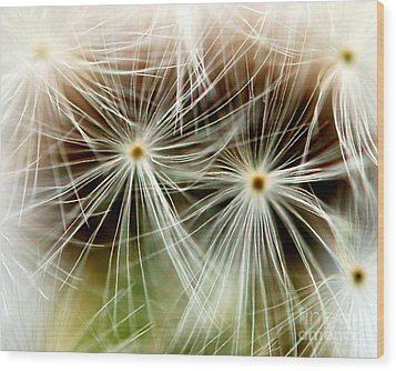 Dandelion Seed Macro Wood Print by Christy Phillips