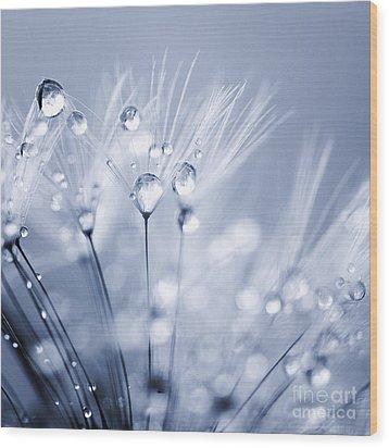 Dandelion Seed With Water Droplets In Blue Wood Print by Natalie Kinnear