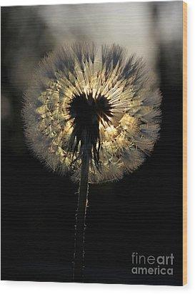 Dandelion Sunrise - 1 Wood Print