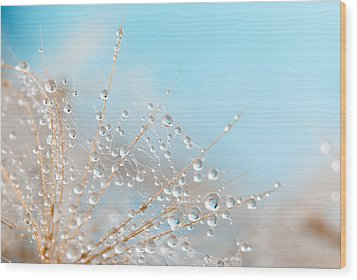 Dandelion Wood Print by Svetoslav Radkov