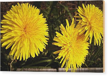 Wood Print featuring the photograph Dandelion Weeds? by Martin Howard