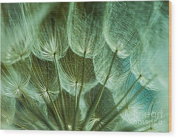 Dandelions 06 Wood Print by Iris Greenwell