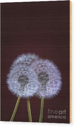Dandelions Wood Print by Donald Davis