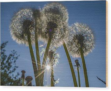 Dandelions In The Sun Wood Print by Adam Budziarek