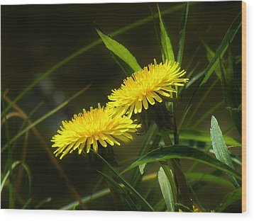 Wood Print featuring the photograph Dandelions by Sherman Perry