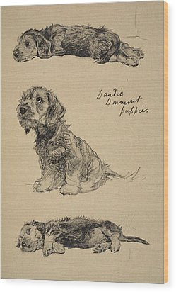 Dandie Dinmont Puppies, 1930 Wood Print by Cecil Charles Windsor Aldin