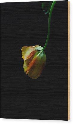 Dangling Tulip Wood Print