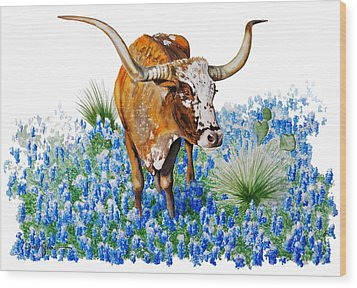 Da102 Longhorn And Bluebonnets Daniel Adams Wood Print