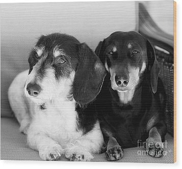 Dapper Doxies Wood Print