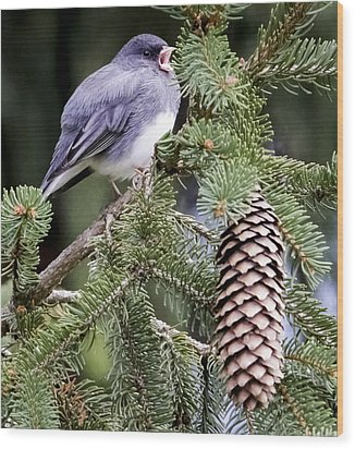 Dark-eyed Junco Speaks Out Wood Print