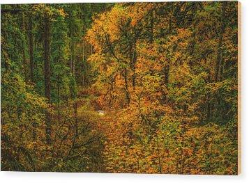 Dark Forest Wood Print by Dennis Bucklin