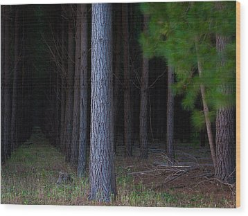 Dark Forest Wood Print by Tim Nichols
