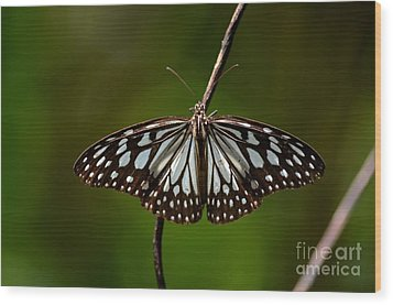 Dark Glassy Tiger Butterfly On Branch Wood Print by Imran Ahmed