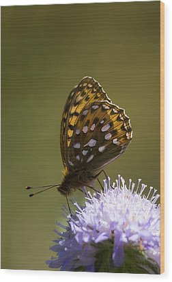 Dark Green Fritillary Wood Print